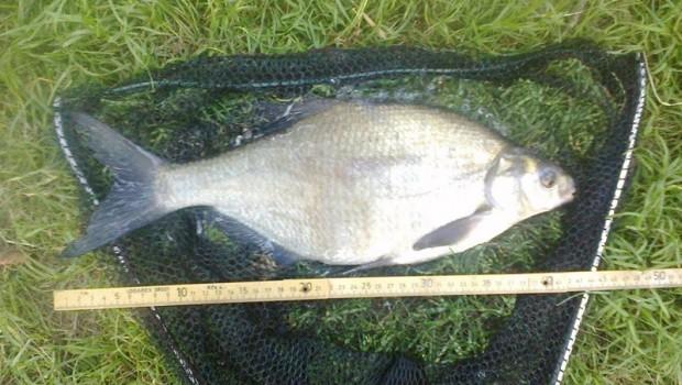 Cejn velký – tuto rybu lze lovit po celý rok, nejlépe však bere od dubna do září. Ukázalo se, že pro jejich lov je nejlepší teplé počasí a dusno. Nepříhodnější […]