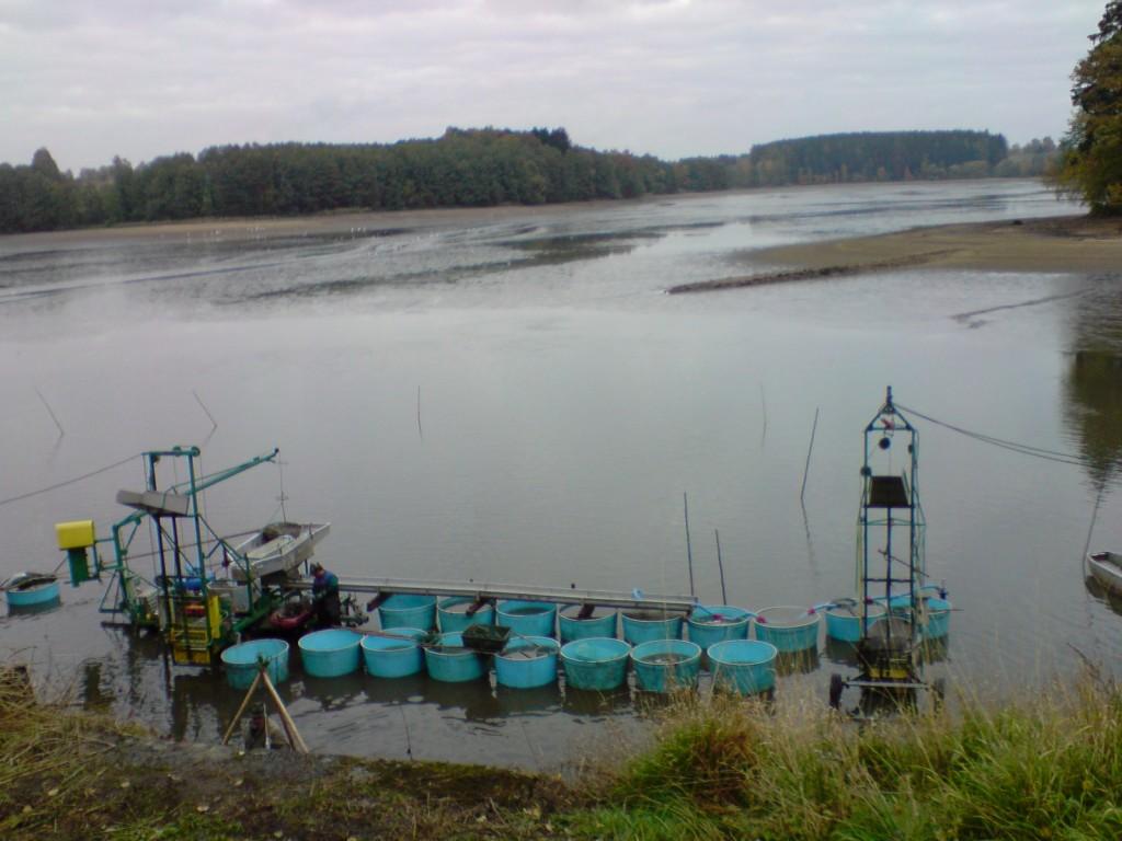 Výlov rybníka Hejtman
