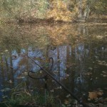 Vydařený den u vody