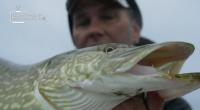Pátý díl souboje Fly vs Jerk. Dvě metody, tři dny, čtyři rybáři – je to Fly vs Jerk 5.Která z metod je nejlepší – fly nebo jerk?Za tým Fly s […]